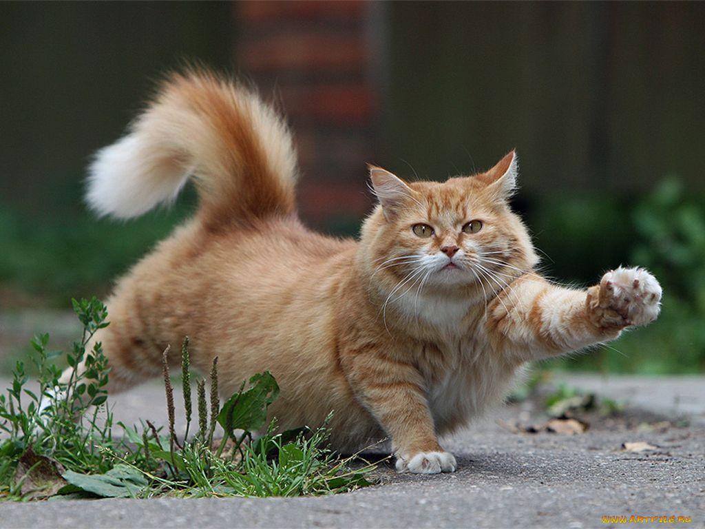 картинки с котом как настроение его довольно